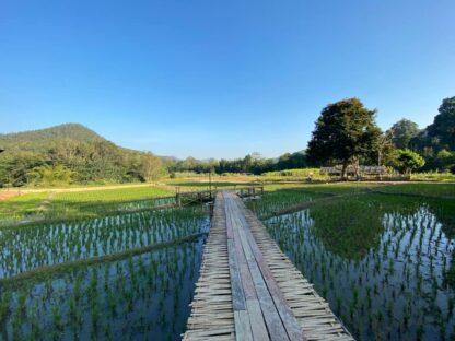 Chiang Mai Elephant home - Teak wood House - Maewang - Landscape
