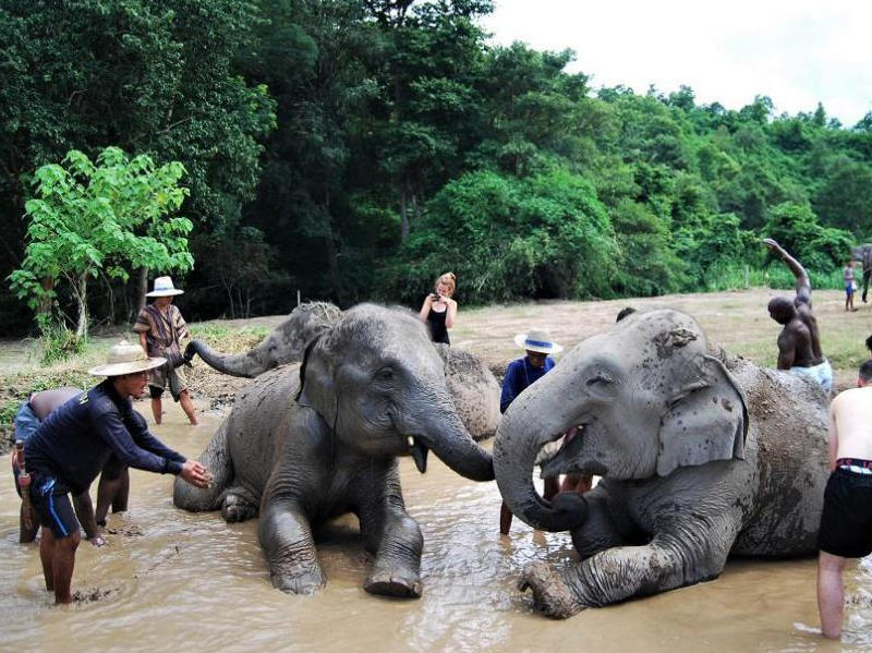 elephant_full_day_tour
