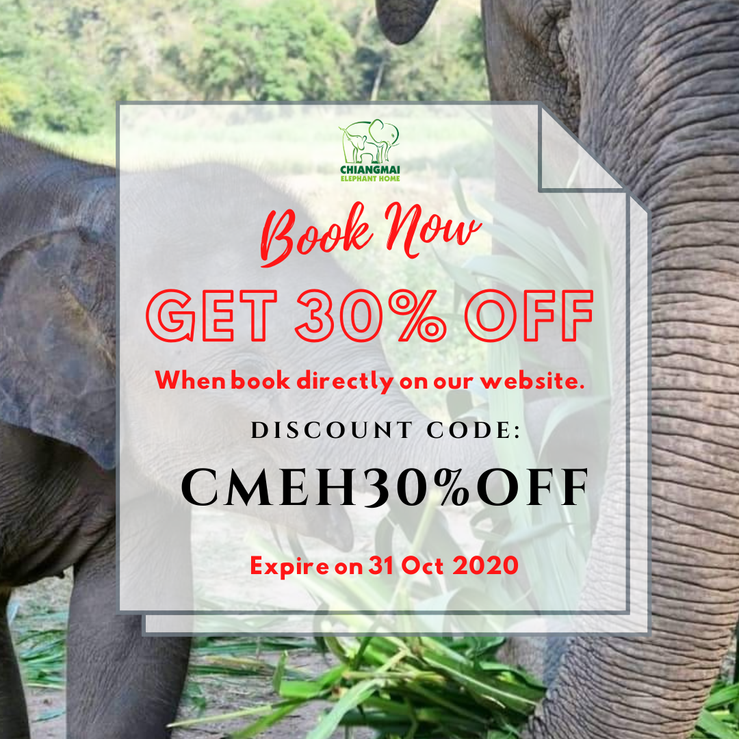 Chiang Mai Elephant home - Promotion - Book NOW ex 31 Oct 2020